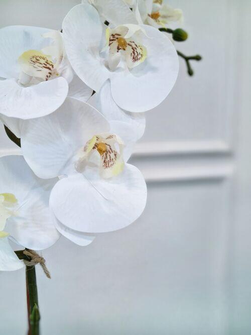 Arranjo Orquídea Anne Branca