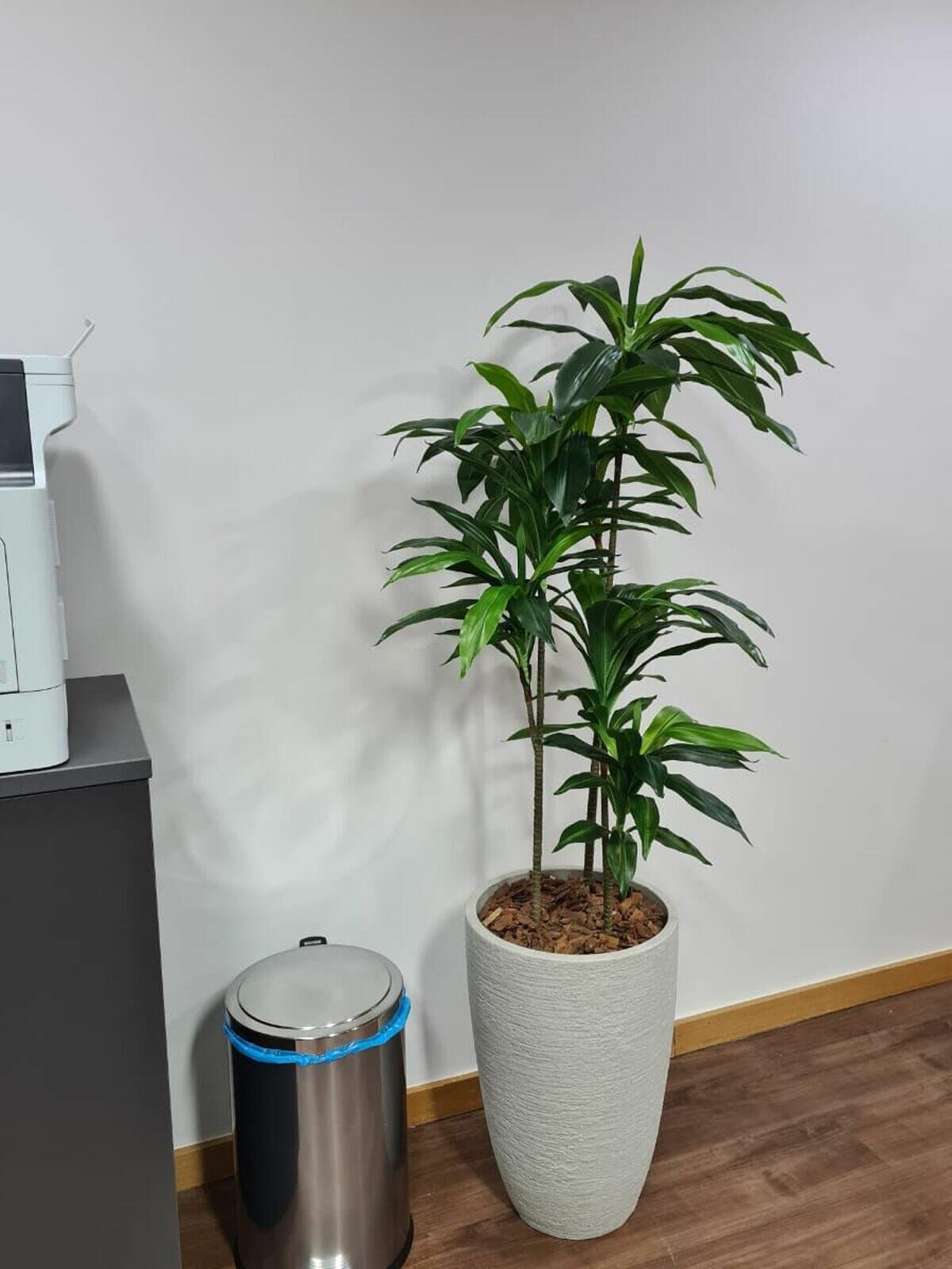 Dracena Verde 170cm (Somente árvore)