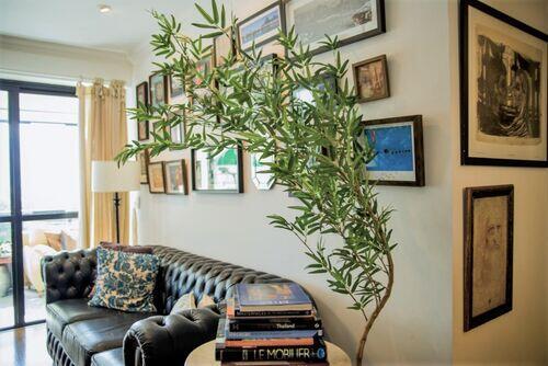 Bambu Mossô (Somente árvore)
