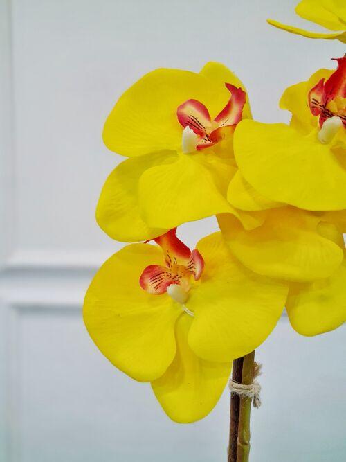 Arranjo Orquídea Anne Amarela