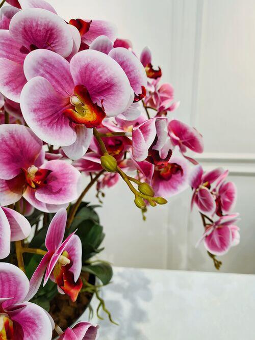 Arranjo Orquídeas Eva