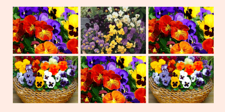 4 Flores Comestíveis para você adicionar às suas receitas